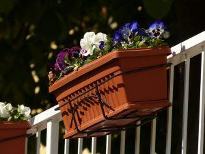 balcony-plants-357702_640
