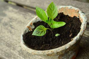 plant-786689_640